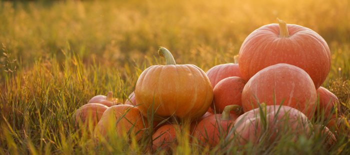 Offre Halloween jusqu'au 1er novembre