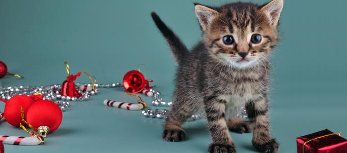 10 euros offerts pour consultation par chat sur Avigora